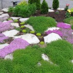 minimalistic gardening with rocks ideas with moss and thyme