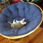 big modern papasan chair