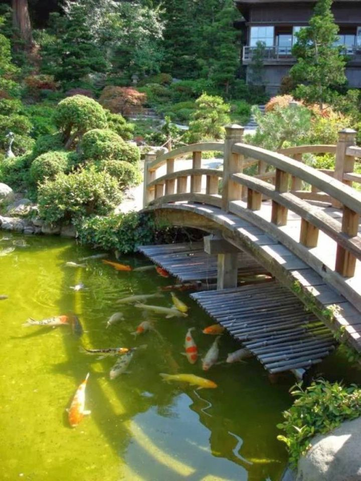 Japanese garden bridge plans across koi pond