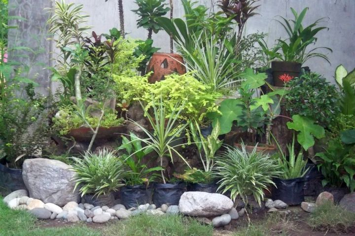 Gorgeous small rock garden designs for Small patio plant ideas