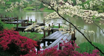 japanese garden designer with wood deck and pathway