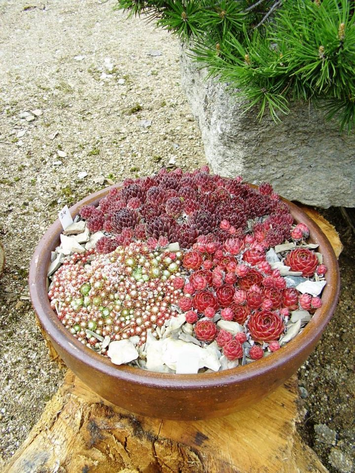 small rock garden designs in a bowl