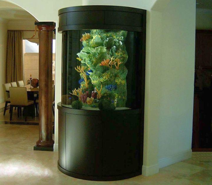 contemporary fish tank coral tank