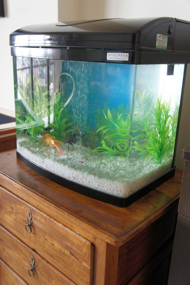 contemporary fish tank prefab