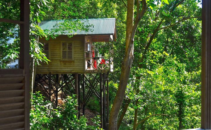 half hidden treehouse on stilts