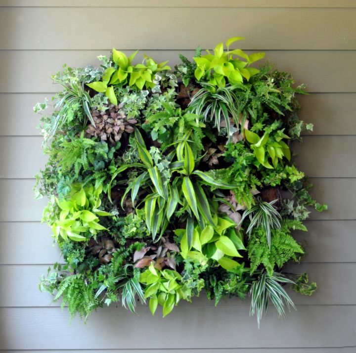 lush and lovely indoor wall hanging planter