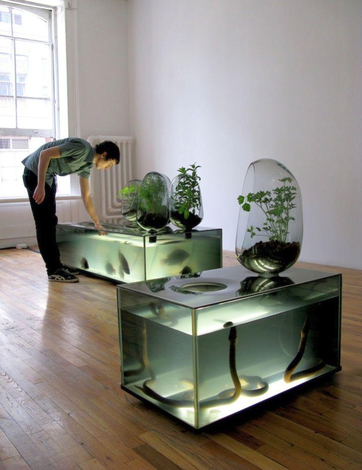 minimalist contemporary fish tank for eels