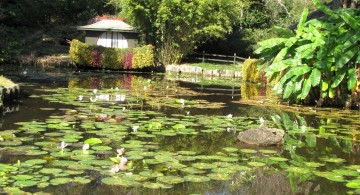 oriental garden design with koi pond