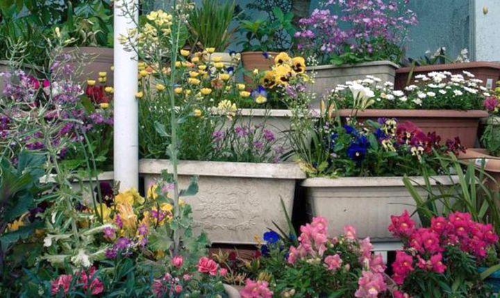 terraced flower garden with pots