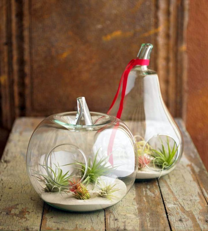 a pair of pumpkin jars air plant terrarium ideas