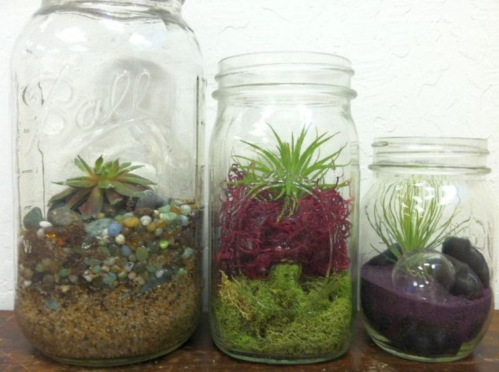 a trio of air plant terrarium ideas