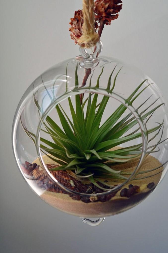 Adorable Air Plant Terrarium Ideas