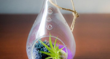 air plant terrarium ideas in unique jar
