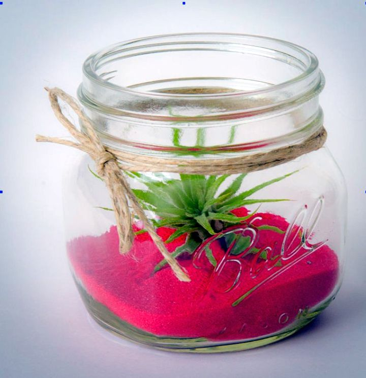 air plant terrarium ideas with magenta sands
