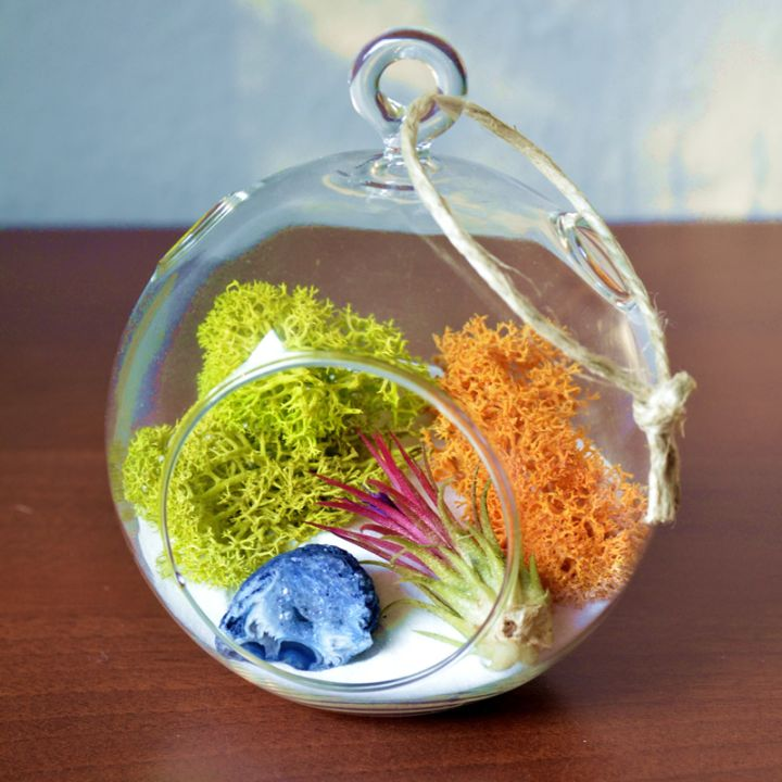 air plant terrarium ideas with orange and green plants