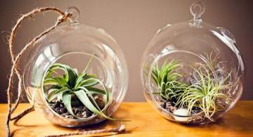 featured image of ar plant terrarium ideas