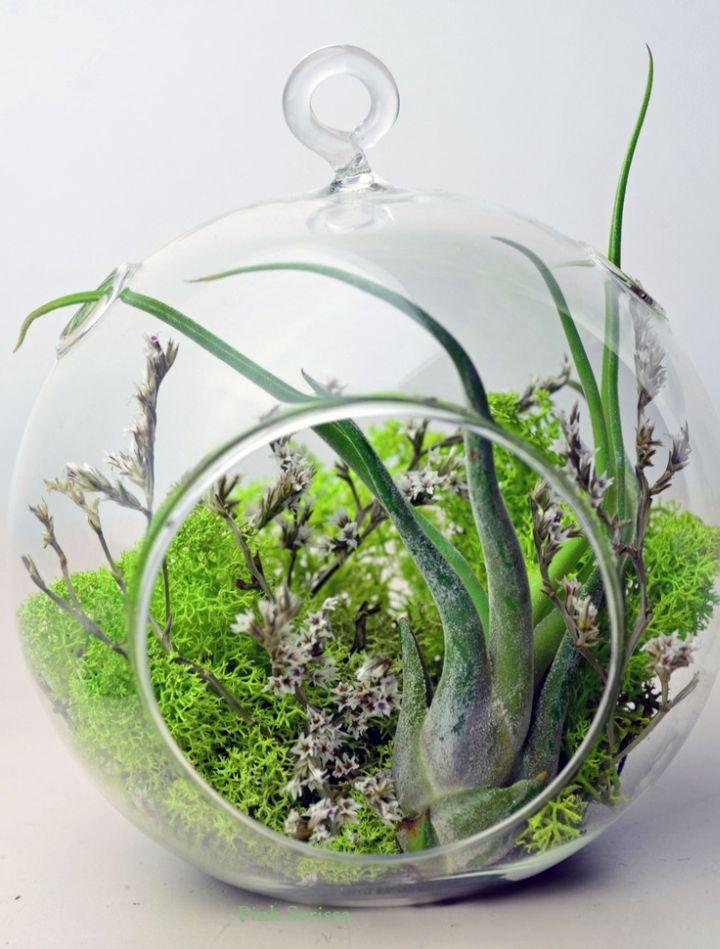 Greenery Themed Air Plant Terrarium Ideas