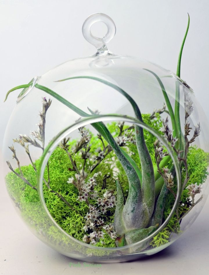 greenery themed air plant terrarium ideas