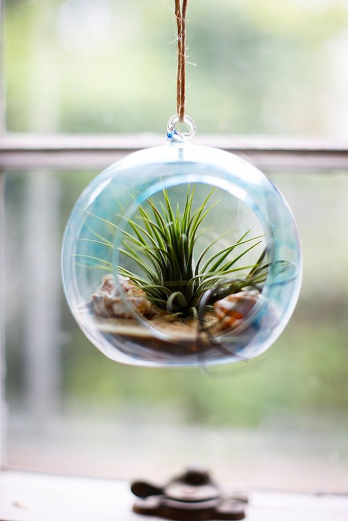 hanging blue jar air plant terrarium ideas