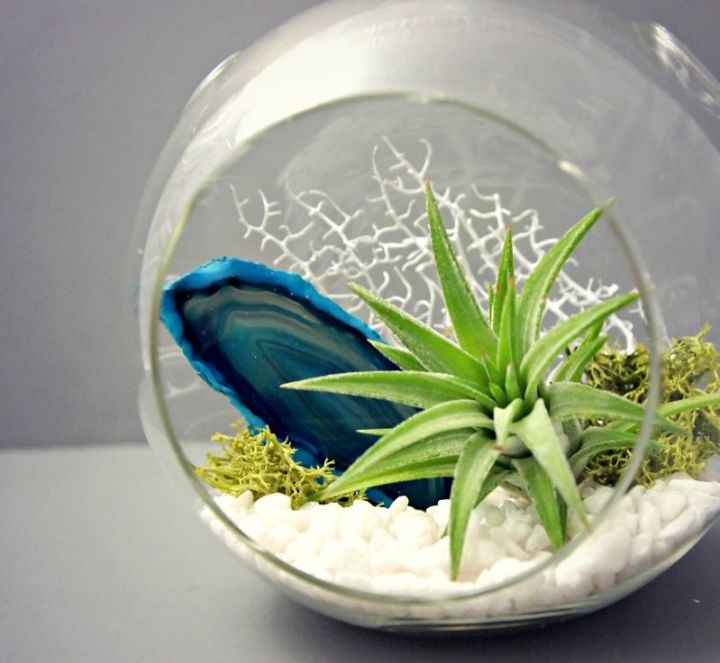 minimalist air plant terrarium ideas