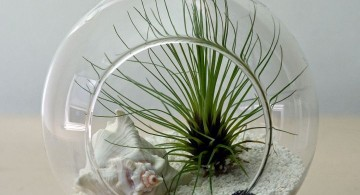 minimalist winter wonderland themed air plant terrarium ideas
