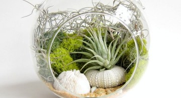 packed air plant terrarium ideas