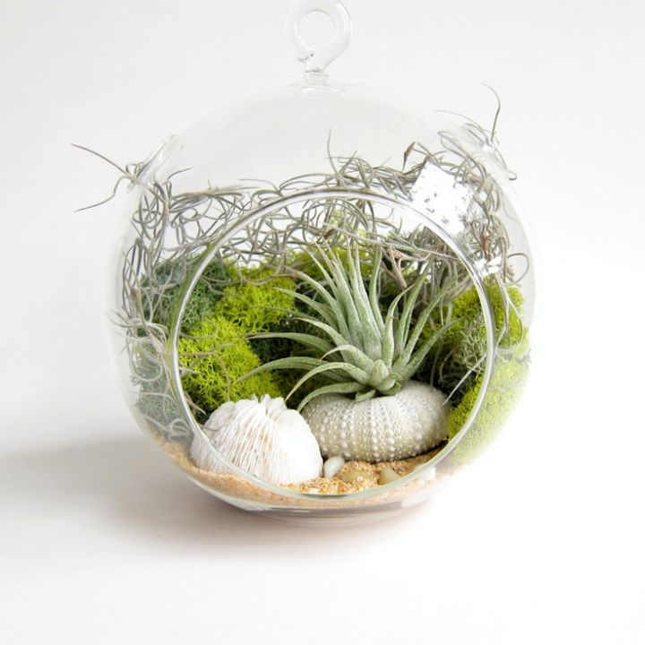 Adorable Air Plant Terrarium Ideas