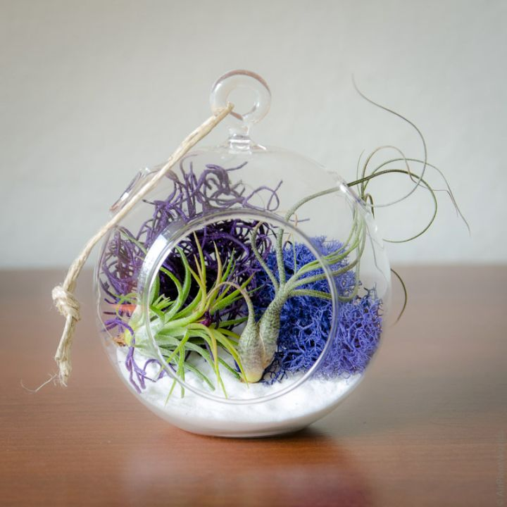simple air plant terrarium ideas