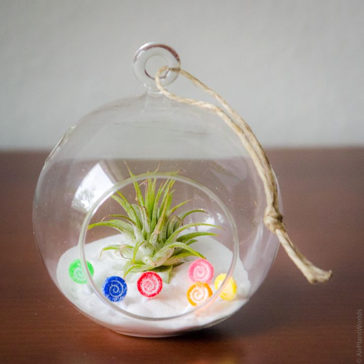 simple but colorful air plant terrarium ideas