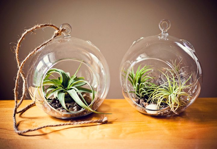 two jars air plant terrarium ideas