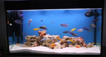 contemporary fish tank in black