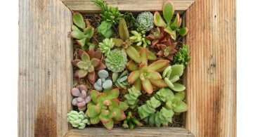 indoor wall hanging planter thick framed