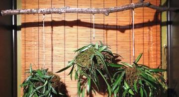 unique indoor wall hanging planter