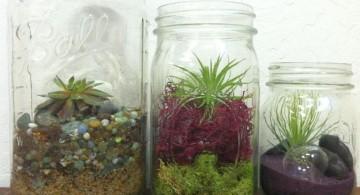a trio of air plant terrarium ideas