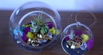 air plant terrarium ideas in blue jars