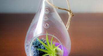 air plant terrarium ideas in unique jar