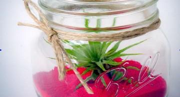 air plant terrarium ideas with magenta sands