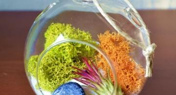 air plant terrarium ideas with orange and green plants