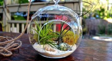 cute minimalist air plant terrarium ideas