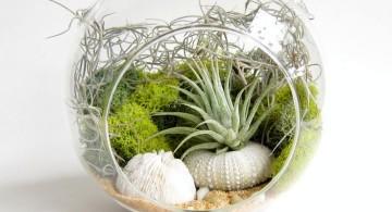 packed air plant terrarium ideas