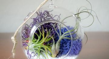 simple air plant terrarium ideas